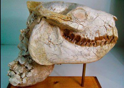Fósiles de invertebrados