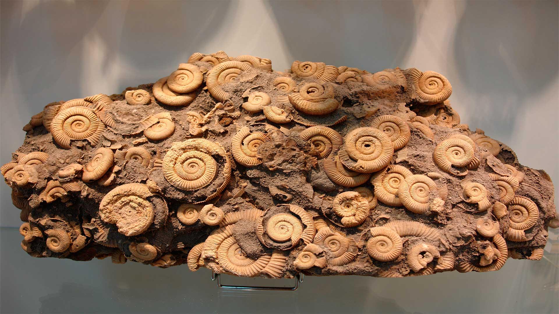 Fósiles Qué son