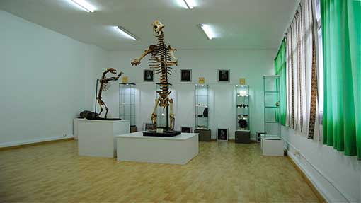 Museo Mufomi Sala de los Osos