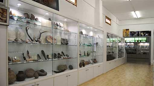 Museo Mufomi. Sala de la Evolución