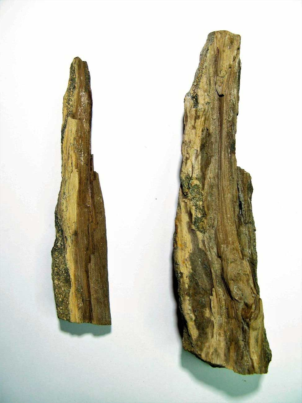Fósiles de la Antártida en el Mufomi