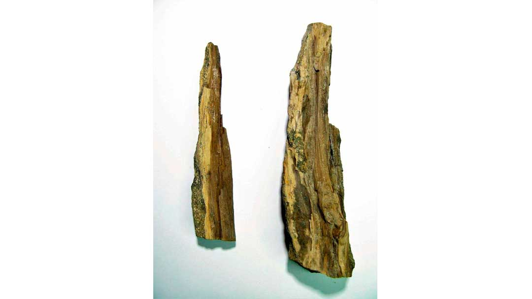 fosiles-antartida-museo--Cupressinoxylon-seymourense