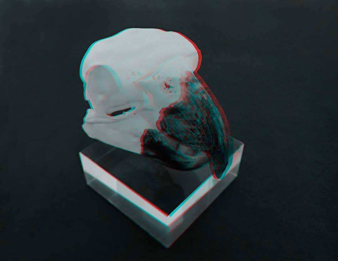 Cacatua-alba--Australia-1080x810