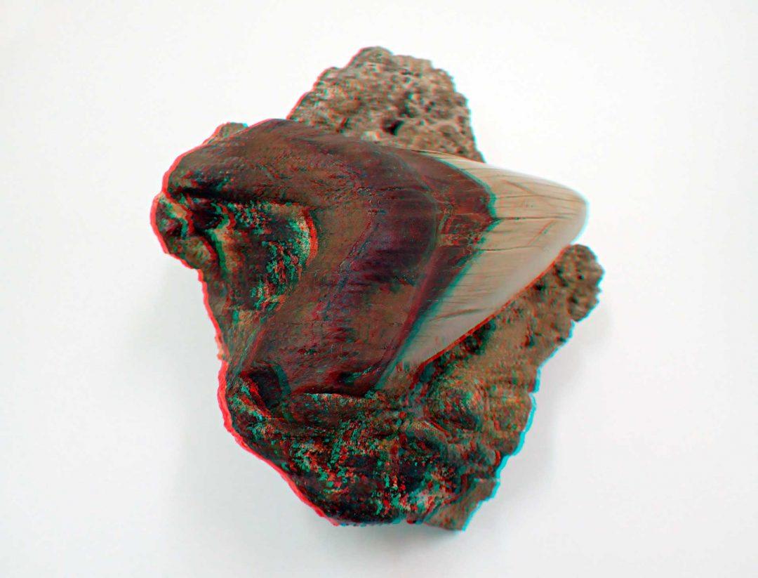 Carcharocles-megalodon-Atacama-Chile-1080x810