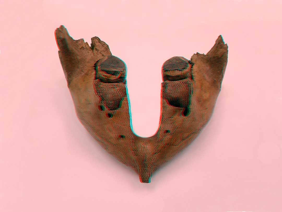 Mammuthus-primigenius-Mar-del-Norte-1080x810