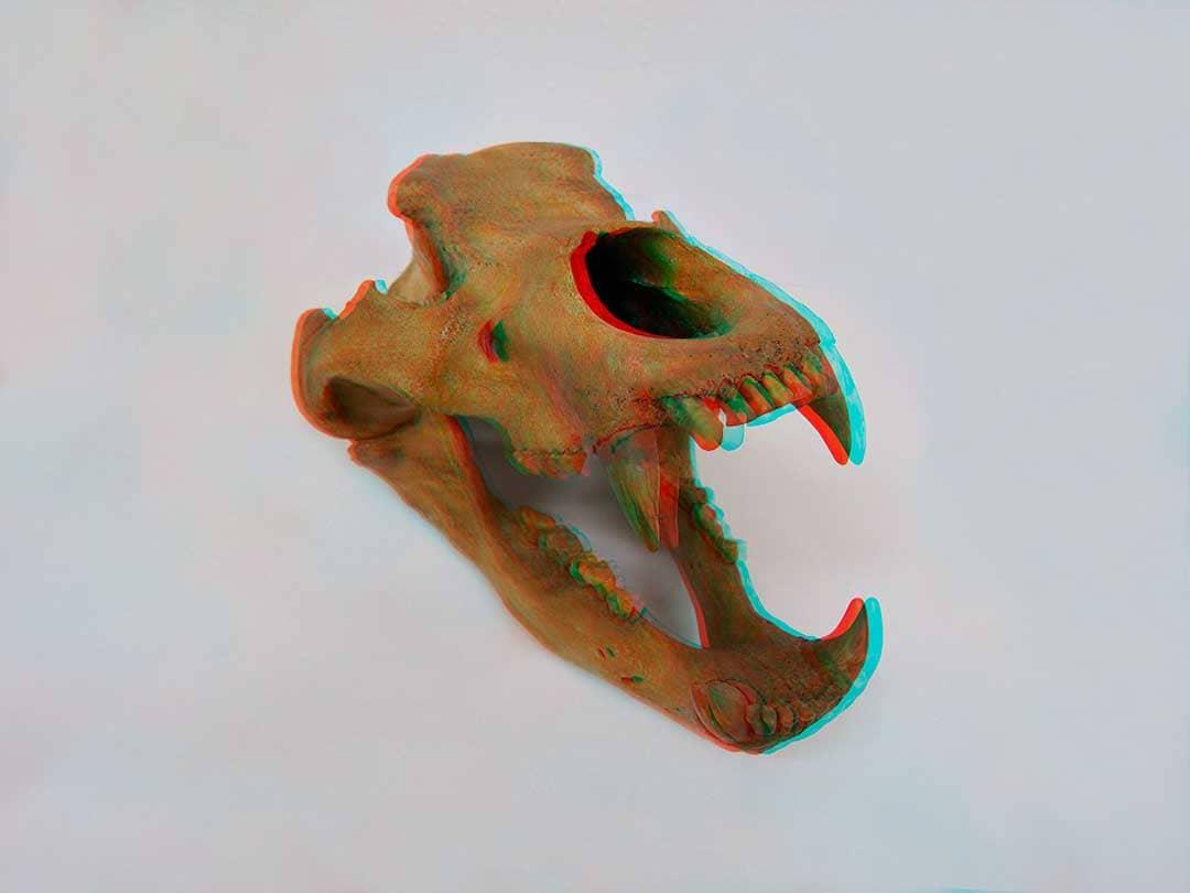 Ursus-spelaeus-uralensis-Cueva-de-Tayma-Montes-Urales-Rusia-1080x810