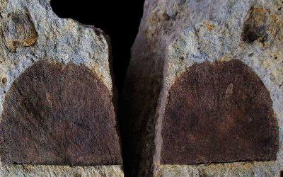 Braquiópodos del museo (1)