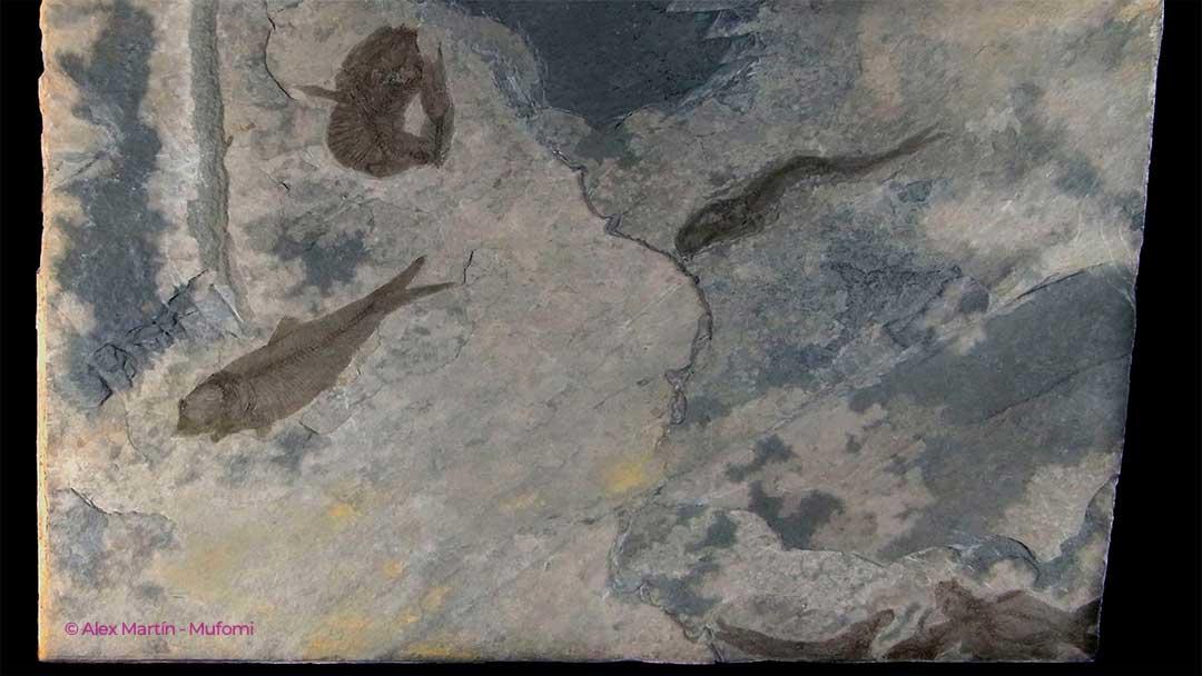 peces fósiles placa de pizarra zeanuri
